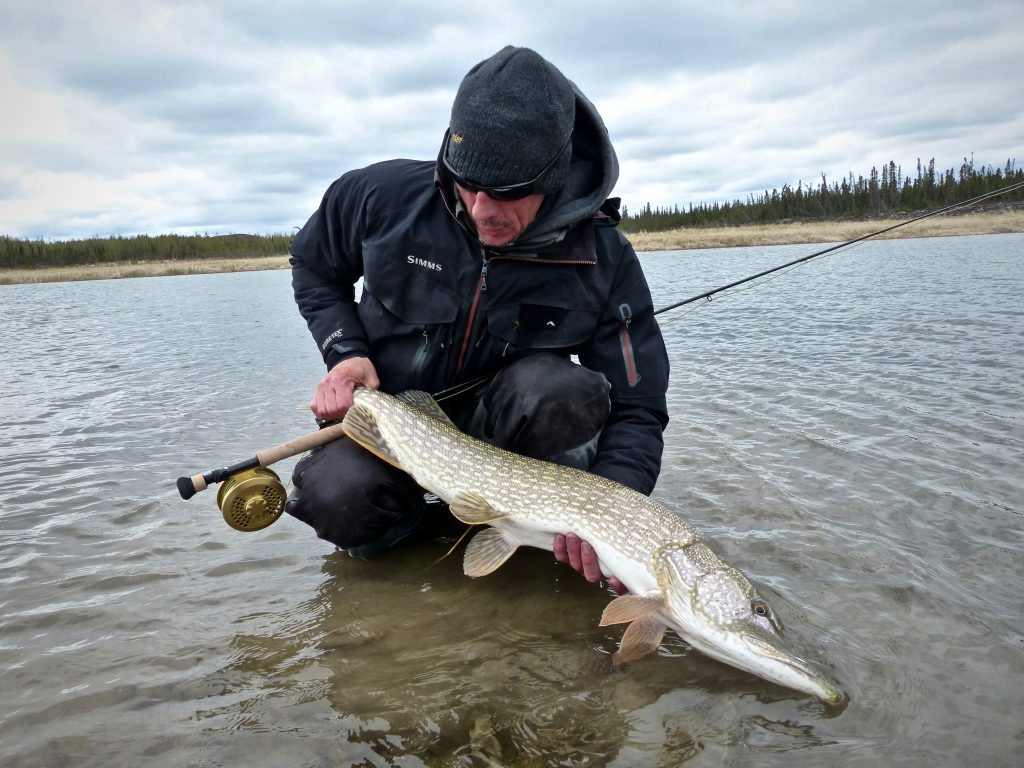 Northwest Territories Great Slave Lake Pike Fishing